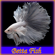Betta Fish by paodroid icon