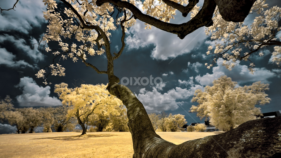 Autumn in Singapore by Jimmy Chiau - Landscapes Forests ( park, tree, infrared, pwcautumn, landscapes, singapore )