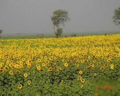 Country India MayapuraHDThemes - náhled
