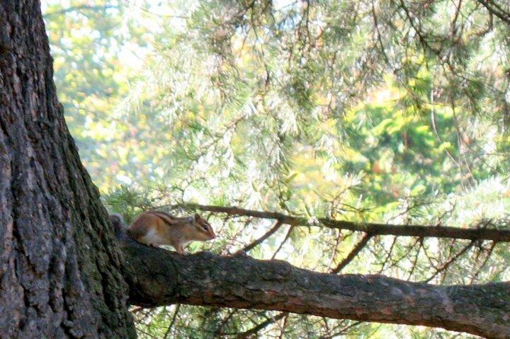 Squirrel di Daigo