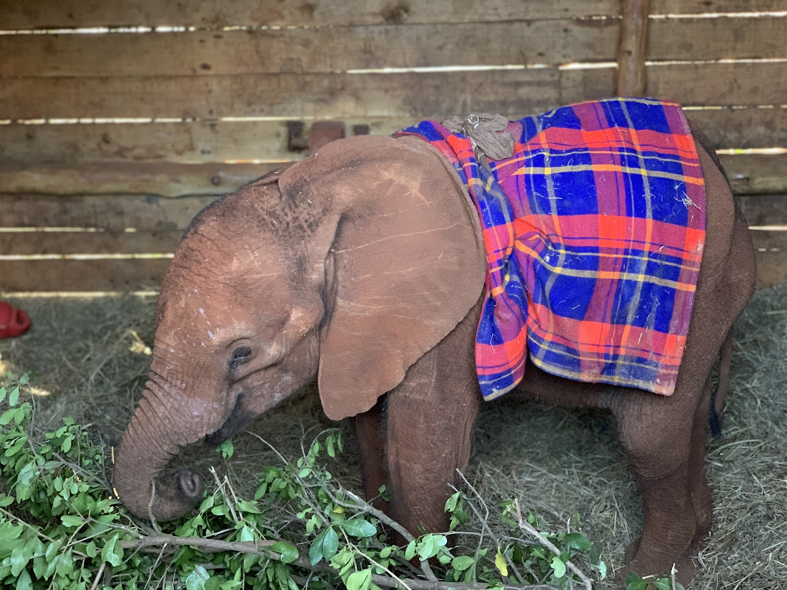 DSWT - David Sheldrick Wildlife Trust. Photo by Young Lee