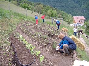 Photo: si pianta l'orto sinergico
