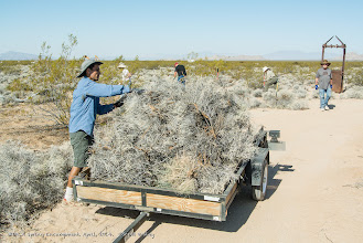 Photo: Ed Laag loads up the trailer full of burro bushes and weeds. (Scott Braley)