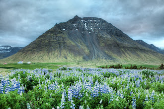 Photo: Flowers and Carved Stone  I kept driving and driving and driving and weaved my way up past a town in the far northwest fjords. I saw this strangely (and nicely) shaped mountain with that strange early-morning lighting. Then, I spent another hour or so hiking around until I found this special kind of blue flower (EDIT thanks to commenters Scott & Guðjón - it is called the lupine or lúpína in Icelandic). Just when I was about to give up, I found a giant patch of them, so I selected the right lens and set up for this shot.  from the blog www.stuckincustoms.com