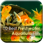 10 Best Aquarium Fish