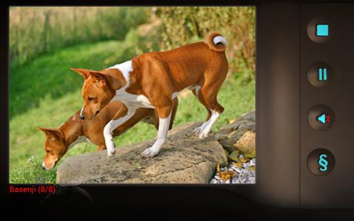 玩免費遊戲APP|下載Slideshow Lullabies: Animals app不用錢|硬是要APP