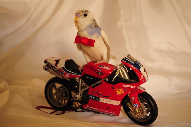 Io con le moto volo! Attila GP di Ilaria Bertini