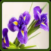 Prueba de flor