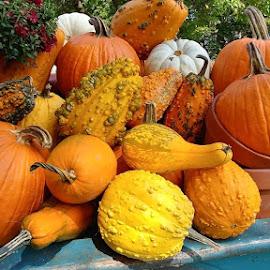 Pumpkins and Gourds by Rita Goebert - Nature Up Close Gardens & Produce ( pumpkins, gourds, produce; fall colors; autumn; new york state,  )