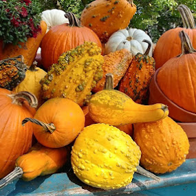 Pumpkins and Gourds by Rita Goebert - Nature Up Close Gardens & Produce ( pumpkins, gourds, produce; fall colors; autumn; new york state,  )
