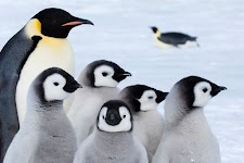 pinguïn met jongen