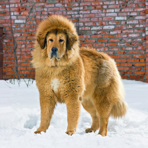 Image result for hairy dogs on the shelves in China