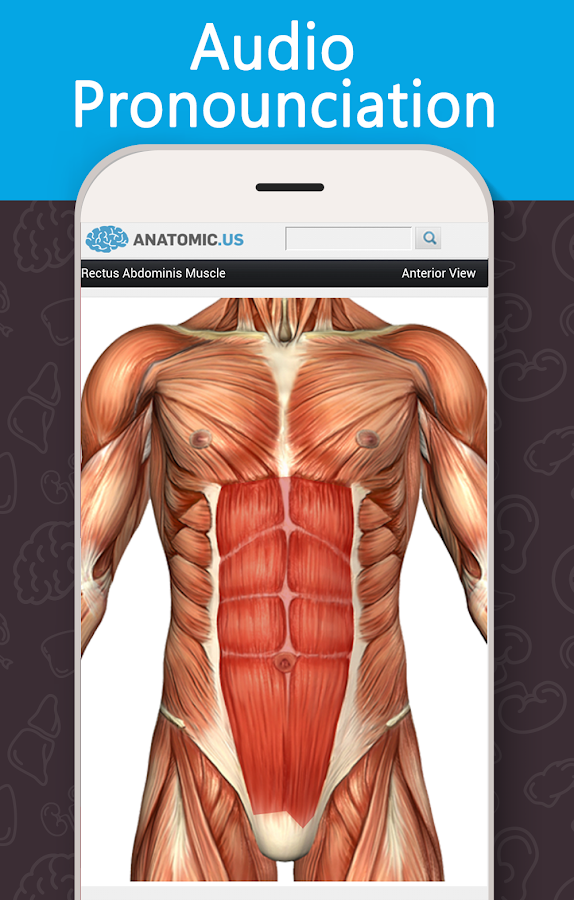 anatomy game anatomicus pro - android apps on google play, Muscles