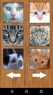Funny Cat Kitten Sounds - náhled