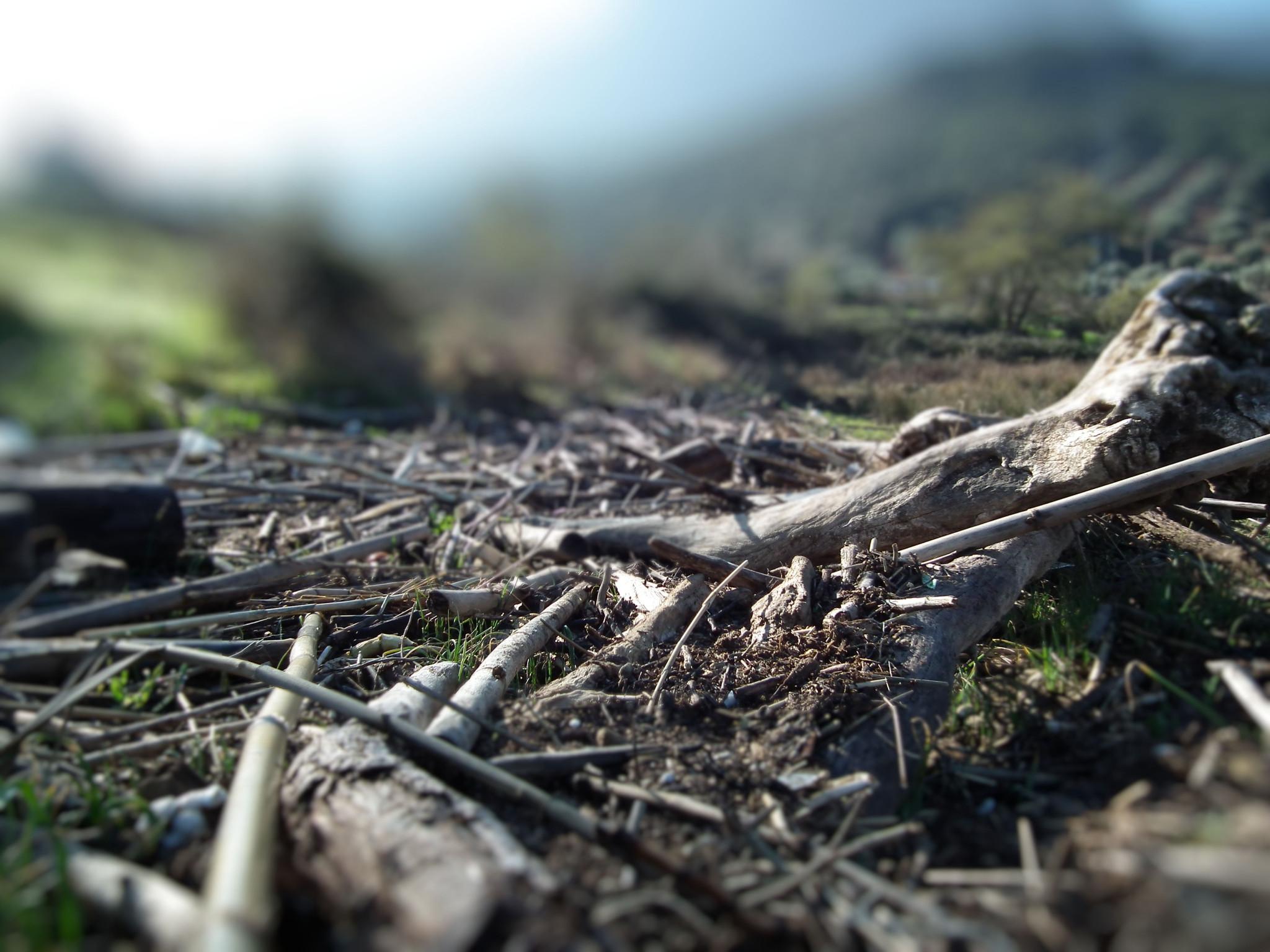 Photo: Pantana