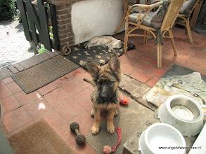 Photo: Na de middagwandeling: Feetje heeft de sloot langs het pad van de Bosrand gevonden.......