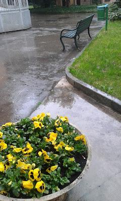 pioggia e la panchina  verde di marina.zhubryk