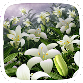 Lily Flower Theme