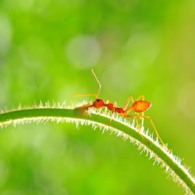 ANT by Anton Wahyudi - Animals Other