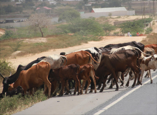 Cattle graze at the roadside