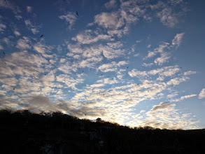 Photo: Sky over Genovesa filled with sea birds.