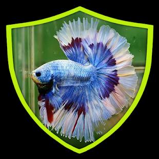 Hickey okrasné rybky krása - náhled