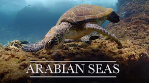 Arabian Seas thumbnail