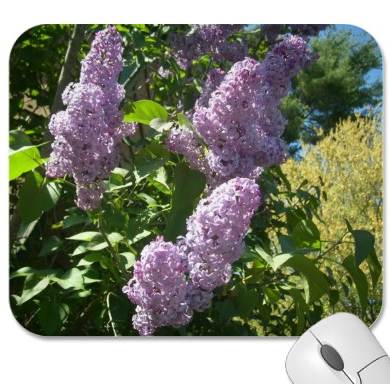 Photo: Lilacs (I love Lilacs they are my favorite flower)  Lilacs different photos I took on zazzle items  http://www.zazzle.com/renderlyyours/lilac+gifts  I stepped out into my back yard & the beauty wonder and magic of nature surrounds me.