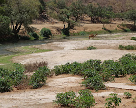 Photo: Wadi Derbat - a reacration area - especailly after the rainy season.