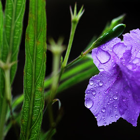 The Blue.. by Ramesh Kallampilly - Nature Up Close Flowers - 2011-2013 ( colour, nature, flora, blue, flower )