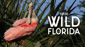 Wild Florida thumbnail