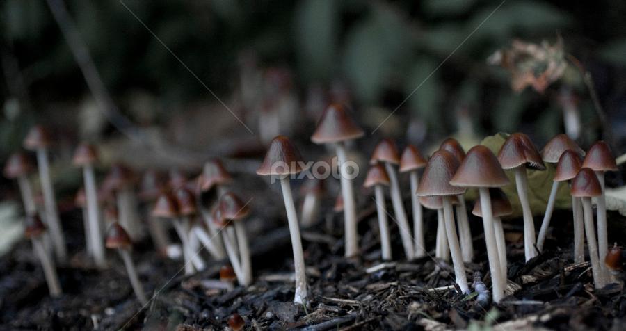 Mushrooms by Alina Jumabhoy - Nature Up Close Mushrooms & Fungi ( wild, macro, nature, family, ground, forest, mushrooms,  )