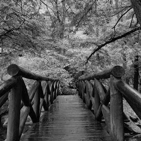 by Arie Shively - Black & White Landscapes (  )