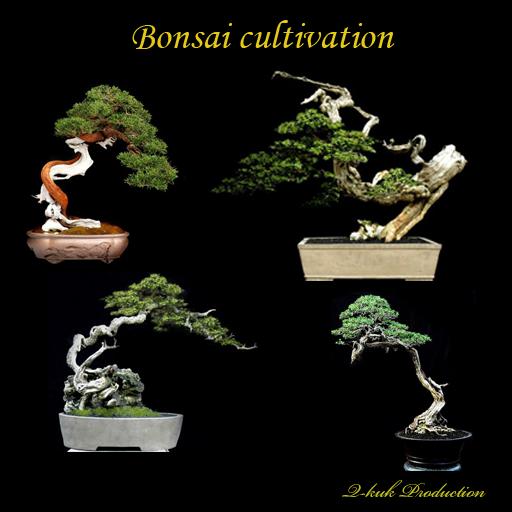 Bonsai cultivation