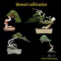 Bonsai cultivation icon