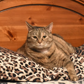 by Brian Baggett - Animals - Cats Portraits