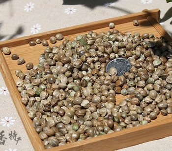 High qualtiy HEMP SEEDS,different size above 5.0mm,3.5-5.0mm,below 3.5mm