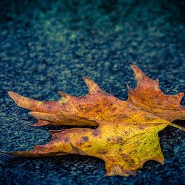 by Jasenka LV - Nature Up Close Leaves & Grasses (  )