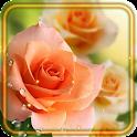 Roses Fresh Dew LWP icon