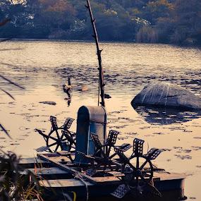 Lotus Pond by Raja Abhishek Reddy - Landscapes Waterscapes ( water, nature, lotus pond )