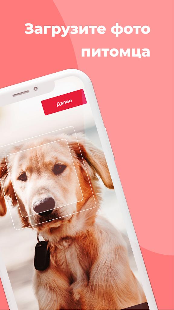 Загрузить приложение фото вставлять животных