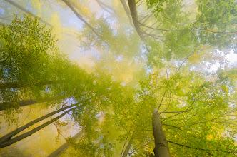 """Photo: Wollte das Bild zuerst nicht zeigen, aber gestern im Fotoclub (als ich dieses Bild gezeigt habe) hat mich die positive Reaktion sehr überrascht ;) Hoffentlich poste ich jetzt nicht umsonst und jemand findet diese Abstraktion auch """"nice"""" ;)  #landscapephotography curated by +Margaret Tompkins, +Ke Zeng, +David Heath Williamsand +paul t beard +Landscape Photography +HQSP Landscape #hqsplandscape  #photoplusextract  +10000 PHOTOGRAPHERS around the World #1000photographersaroundtheworld by +Robert SKREINER and +Walter Soestbergen #foggyfriday  #autumnphotography"""