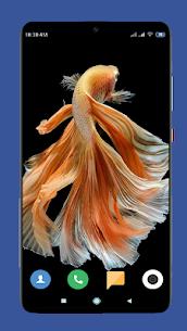 Betta Fish Wallpaper HD 3