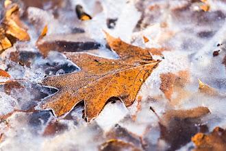 Photo: +Leaves On Thursday Inniswood Botanical Garden in winter