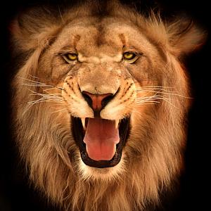 Lion Roar2 bright.jpg