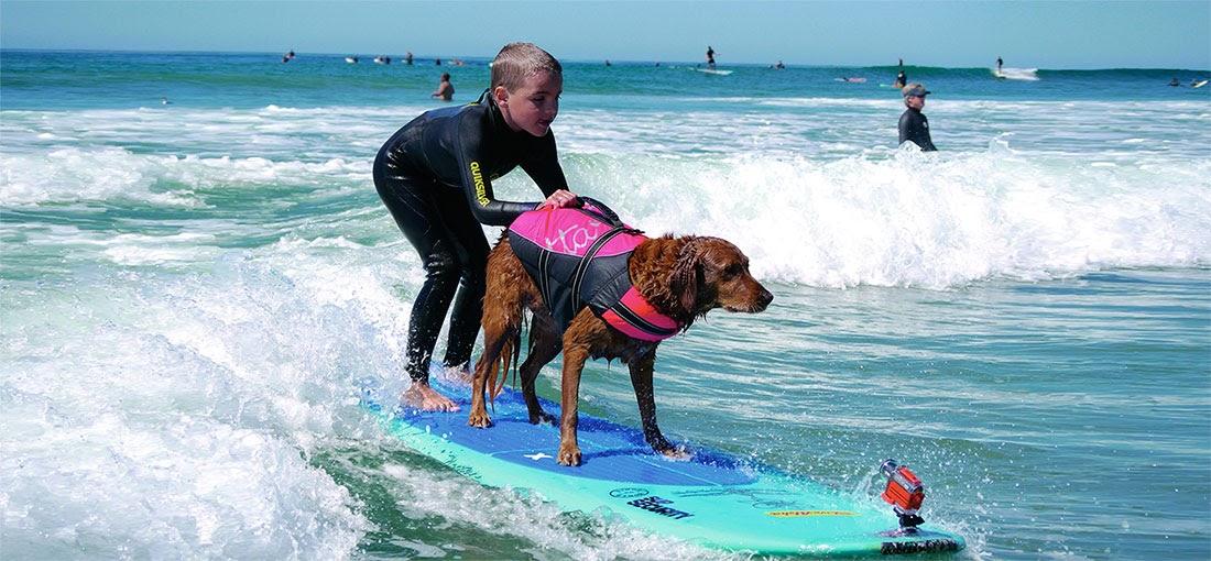 Ricochet, un perro de asistencia surfista