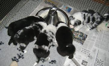 Photo: Zelf eten!!!