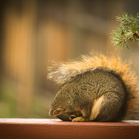 Praying for More Nuts by Richard Saxon - Animals Other ( animals, may, 2015, backyard, squirrel )