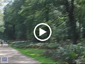 Video: > ENGLISH < The New Forest is an area of southern England which includes the largest remaining tracts of unenclosed pasture land and forest. TIP: Take a train to Brockenhurst, hire a bike from Cyclexperience (www.newforestcyclehire.co.uk) and bike to Burley. Visit Cider shop (www.newforestcider.co.uk) and go for satisfying Sunday roast. For accommodation in New Forest check http://www.hotelscombined.com/City/Brockenhurst.htm?a_aid=31292&label=en_picasa │> ČESKY < New Forest byl založen králem Williamem I. Dnes zde můžete vidět divoké koně, ochutnat cider (alkoholický mošt) a projet se na kole po velmi kvalitních cyklostezkách. TIP: Doporučujeme přijet vlakem do vesnice Brockenhurst, vypůjčit si kolo (Cyclexperience www.newforestcyclehire.co.uk) a vyjet směr vesnička Burley. Tam se podívejte do výrobny cideru (www.newforestcider.co.uk) a zajděte na nedělní tradiční oběd Sunday Roast. Ubytování najdete zde http://www.hotelscombined.com/cz/City/Brockenhurst.htm?a_aid=31292&label=cz_picasa