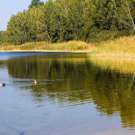 The lake and the ducks by Tomasz Banasiak - Uncategorized All Uncategorized ( forest, duck, autumn, water, ducks, lake, trees )